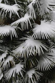 palmier-sous-la-neige-copie-001